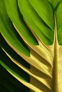 Modern, Blätter, Design, Makro