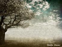 Baum, Frühling, Erinnerung, Kirschbaum