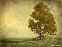 Baum, Herbst, Friedlich, Landschaft