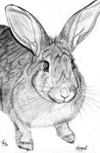Detailtreu, Bleistiftzeichnung, Hase, Tiere