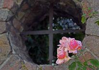Reise, Urlaub, Radebeul, Rose