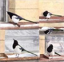 Natur, Elster, Vogel, Malerei