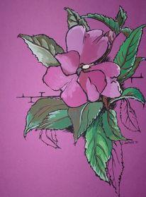 Deckfarbe, Grün, Rosa, Fleißige lieschen