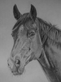 Pferde, Zeichnung, Stute, Bleistiftzeichnung