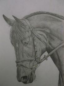Natur, Pferde, Tiere, Zeichnung