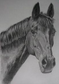 Hengst, Stute, Zeichnung portrait, Pferde