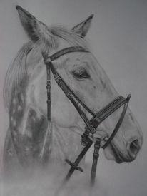 Natur, Pferde, Bleistiftzeichnung, Hengst