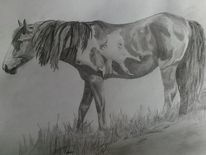 --Wild Mustang--
