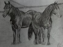 Bleistiftzeichnung, Pferde, Natur, Zeichnungen