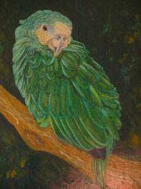 Grün, Maltafel, Papagei, Vogel