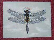 Libelle, Malerei