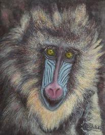 Augen, Mandrill, Affe, Haare