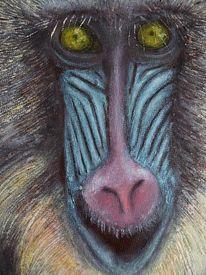 Mandrill, Affe, Haare, Augen