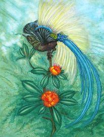 Vogel blüten, Malerei, Tiere, Paradiesvogel