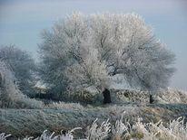 Fotografie, Winterlandschaft, Weise, Baum