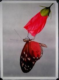 Illustrationen, Schmetterling