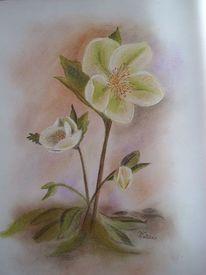 Pastellkreide christrose, Grün weiß blume, Frühling, Kreide