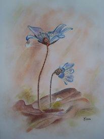 Laub, Kreide, Leberblümchen, Blumen