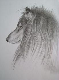 Collie bleistift hund, Zeichnungen, Tiere