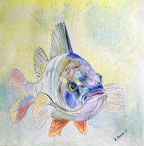 Fisch, Wasser, Aquarellmalerei, Barsch