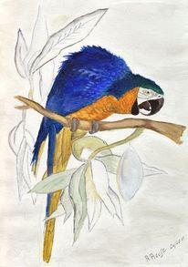 Vogel, Aquarellmalerei, Gelbbrustara, Papagei