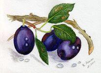 Blau, Aquarellmalerei, Pflaume, Obst