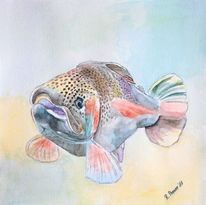 Aquarellmalerei, Forelle, Regenbogenforelle, Wasser