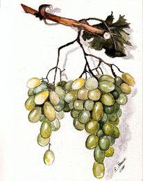 Wein, Grün, Obst, Traube