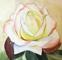 Aquarellmalerei, Rose, Weiß, Blüte
