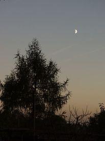 Baum, Mond, Himmel, Dämmerung