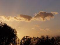 Natur, Baum, Dämmerung, Wolken