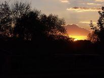 Baum, Sonnenuntergang, Abendrot, Abend