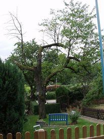 Herz, Baum, Digitale kunst, Natur