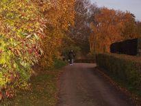 Herbst, Baum, Natur, Hecke