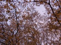 Himmel, Herbstimpresionen, Herbst, Baum