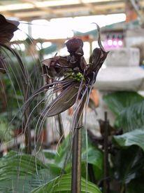 Orchidee, Blüte, Blumen, Pflanzen