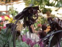 Blüte, Orchidee, Blumen, Pflanzen