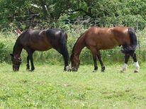 Pferde, Natur, Tiere