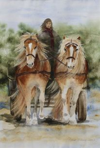 Haflinger, Pferde, Spazierfahrt, Aquarell