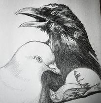 Rabe, Spatz, Vogel, Bleistiftzeichnung