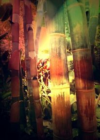 Fotopainting, Pflanzen, Bambus, Digital