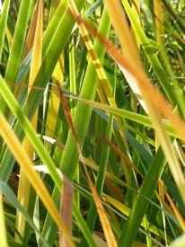 Gras, Digitale kunst, Licht