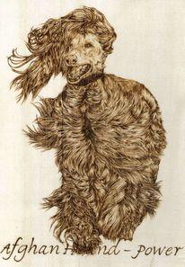 Holz, Afghanischer windhund, Pyrografie, Brandmalerei