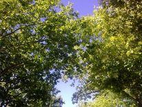 Baum, Himmel, Sonnenstrahlen, Malerei