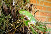 Frosch, Fotografie, Tiere