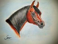 Pferde, Pastellmalerei, Araber, Kreide