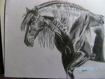 Friese, Pferde, Bleistiftzeichnung, Rappe