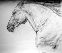 Bleistiftzeichnung, Pferde, Zeichnung, Zeichnungen