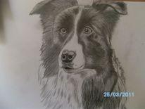 Hund, Zeichnung, Grau, Bleistiftzeichnung