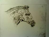 Zeichnung, Pferde, Bleistiftzeichnung, Druck
